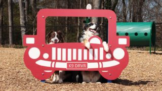 DogPark-action10-gallery