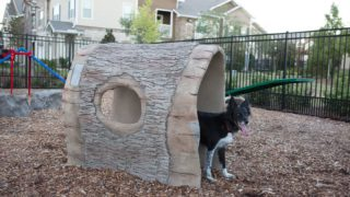 DogPark-action8-gallery